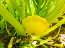 Golden Marbre Orange Patty pan - Copy.jpg
